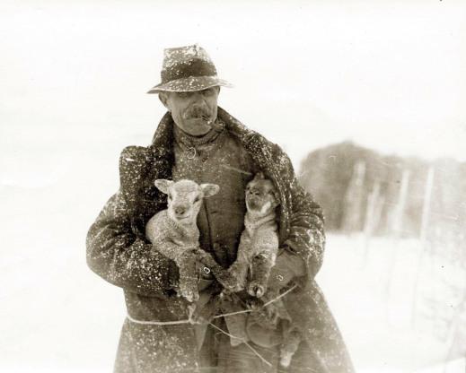 garland-n5530-shepherd-lambs-in-snow