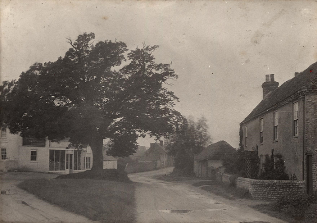 A large oak tree in the middle of a triangular patch of grass surrounded by rough roadways and old buildings